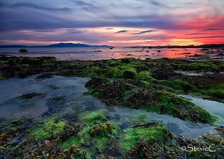 Seaweed, Sea and Sunset