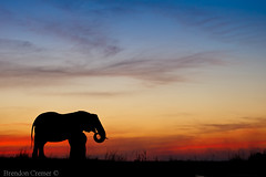 Elephant Sunset by Brendon Cremer, on Flickr