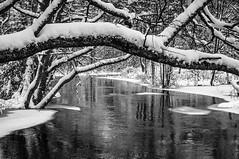Frsta snn ! (-Christer Eriksson) Tags: 5 natur av bh 20130110 1av520130110bh