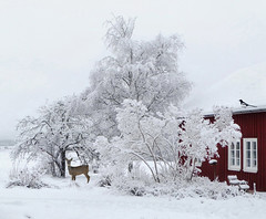 Winter has arrived. (Bessula) Tags: trees winter house snow bird nature bench landscape sweden magpie roe photomix bessula bestcapturesaoi magicunicornverybest coth5 magicunicornmasterpiece elitegalleryaoi rememberthatmomentlevel4 rememberthat