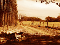 Insolitude (osvaldoeaf) Tags: road trees shadow brazil sky nature leaves brasil sepia photoshop vintage fence landscape monochromatic poetic sofa processing cerrado goinia gois insolit