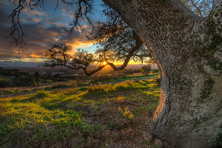 Branch of Light (Explored)