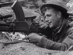 This cat is a true pacifist via http://ift.tt/29KELz0 (dozhub) Tags: cat kitty kitten cute funny aww adorable cats