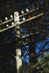 Slightly overgrown (Kiwi Jono) Tags: pentax pentaxk5 smcpda70f24 power line over grown pole wires old