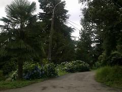 Botanical_Garden_Batumi (2) (Sasha India) Tags: travel georgia journey jardimbotnico botanicalgarden jardinbotanique batumi   gorgie excurso acara    adjara      botanikbahesi         grcstan        nbatatba          acarstan sfr