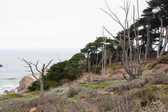 Lands End Hike-29 (John & Ash Crocker) Tags: sutrobath ruins sanfrancisco landsend sf hiking westcoast goldengatebridge ggbridge west nature californiacoast