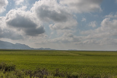 67Jovi-20160820-0101.jpg (67JOVI) Tags: albufera arrozales cullera nubes valencia marjal