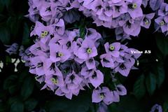 Flowers white (Yaiza AB Photography) Tags: yaizaabphotography flowers white flores blancas zgz zaragoza parque grande canon 1100d espaa spain