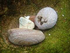 Pebbles in rock pool #marineexplorer (Marine Explorer) Tags: nature marine rockpool marineexplorer