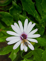 Blanca (josem.arnau) Tags: naturaleza plantas flores color campo