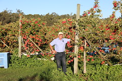 IMG_5929 (mavnjess) Tags: 28 may 2016 harvey edward giblett newton orchards manjimup harveygiblett newtonorchards cripps pink lady crippspinklady popaharv eating apple crunch crunchy biting apples pinklady pinkladyapple harv gibbo orchard appleorchard orchardist