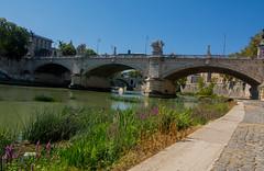 Under the bridge (giumichi) Tags: ponte fiume tevere bridge biondo roma