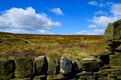 Flints Moor (rustyruth1959) Tags: nature plants grassland grass stones moss blue green clouds sky outdoor heather wall landscape calderdale calderdaleway moor flintsmoor soyland ripponden yorkshire tamron16300mm nikond3200 nikon