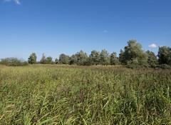 Lauwersmeer (Jeroen Hillenga) Tags: lauwersmeer lauwersmeergebied blauwelucht bluesky riet bomen trees netherlands nederland natuur nature natuurgebied landscape landschap friesland frysln