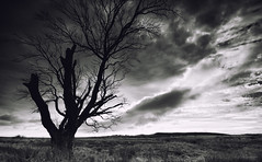 Wellhope IV... (-- Q --) Tags: northumberland niksoftware silverefexpro2 tree silhouette alnwick rothbury edlingham clouds deadtree atmosphere qthompson