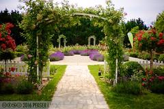 PLW_5604 (Laszlo Perger) Tags: wien vienna sterreich austria blumengarten hirschstetten flowergarden