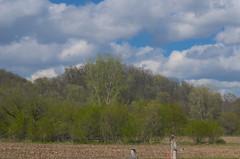 Bluff (wackybadger) Tags: mvc wisconsinstatenaturalarea nikond7000 nikon eagleeyesna clouds forest wisconsin tree vernoncounty nikon1855mmf3556gafsvr bluesky sky sna675 mississippivallyconservancy