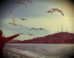 Feeding the Seagulls, Istanbul, Turkey (SvKck) Tags: sea bird turkey feeding seagull trkiye istanbul deniz ku mart adalar princesislands seatransportation adavapuru prensadalar deniztamacl