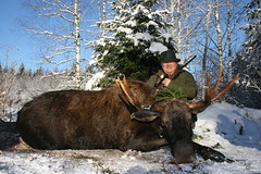 "Moose Hunting In Estonia • <a style=""font-size:0.8em;"" href=""https://www.flickr.com/photos/61427906@N06/8172833741/"" target=""_blank"">View on Flickr</a>"