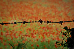 Lest We Forget (JRT ) Tags: wallpaper death sadness nikon war poppy barbedwire soldiers why wars waste poppyfields armisticeday lestweforget d300s onthe11thhourofthe11thdayofthe11thmonth johnwarwood