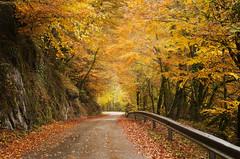 Autumn road (elosoenpersona) Tags: road autumn spain carretera asturias otoño blueribbonwinner abigfave elosoenpersona