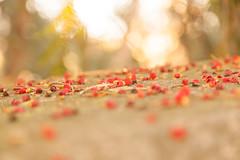 Autumn berries (CwR85) Tags: autumn herbst schlosspark syksy laxenburg