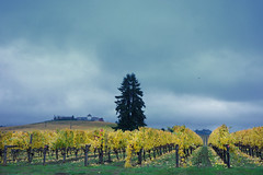 King Estate Winery SERIES (drburtoni) Tags: fall oregon vines wine crow kingestatewinery kingestate