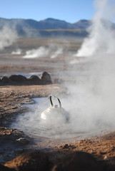 Geysers del Tatio (BruceW.) Tags: chile mountains 35mm de nikon chili desert smoke kettle atacama desierto mm nikkor 35 humo montañas montagnes désert boil tatio geysers fumée geisers bouilloire d3000 bouillir