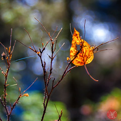 Imprisoned (Kasia Sokulska (KasiaBasic)) Tags: canada mountains fall leaf nationalpark rocky alberta banff johnstoncanyon