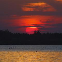 Radiša Živković - In the air tonight (Radisa Zivkovic) Tags: sunset red sun lake nature nikon europe serbia subotica palic srbija