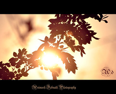 silhuette (Animesh2000) Tags: ocean road blue light sunset red sea orange cloud sun india flower macro reflection art home nature floral beautiful leaves silhouette set night photography mono pattern artistic dusk kerala photograph calicut animesh debnath