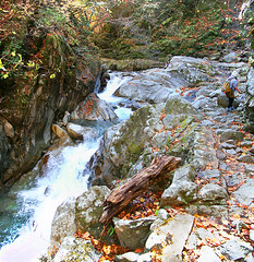 IMG_9810-IMG_9811 (youkaine) Tags: november autumn red orange mountain yellow japan forest river waterfall hiking autumncolors foliage 日本 紅葉 秋 山 yamanashi 11月 川 ハイキング 山梨 nishizawakeikoku 葉っぱ 山梨県