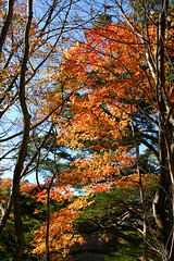 IMG_9925 (youkaine) Tags: november autumn red orange mountain yellow japan forest river waterfall hiking autumncolors foliage 日本 紅葉 秋 山 yamanashi 11月 川 ハイキング 山梨 nishizawakeikoku 葉っぱ 山梨県