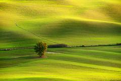 Layers&Lines #9 (Corsaro078) Tags: tree landscape albero paesaggio d3 layerslines