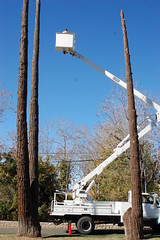 Three trees to be taken down (CALFIREBDU) Tags: tree falling yucaipa