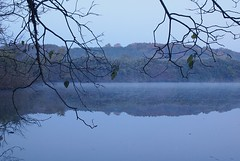 pond and branches (tsubame) Tags: water countryside morninglight pond reservoir saitama  higashimatsuyama ruraljapan