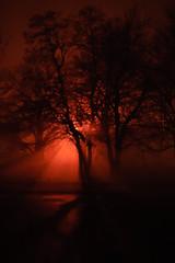 tree and fog (andymudrak) Tags: orange tree fog night plantlife