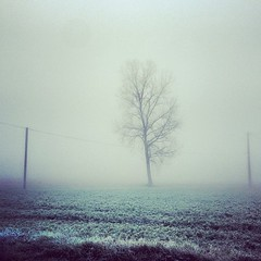 (virto hioho) Tags: nature brouillard