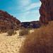 Sinai Wasteland