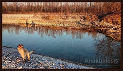 Frozen Time (Anakuklosis) Tags: dogs dog digitalphotography wild waterscapes water waterscape wasteland walking wolfydog wolfdog waterphoto wolfcanine wolf winterscape winter