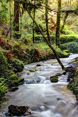 what moves the heart (jana-elise) Tags: outdoor water landscape stream creek river riverbed watercourse waterfall hdr serene movement plant plants tree trees forest green vibrant calm millvalley bayarea longexposure flow flowing white