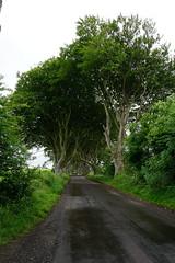 DSC05114 (raehyunie) Tags: dark hedges ireland