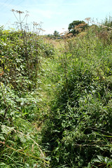 979 of 1096 (Yr 3) - A path less trod, aka location hunting (Hi, I'm Tim Large) Tags: path unused desolate open public trail track overgrown fuji x70 365 366 fujinon fujifilm