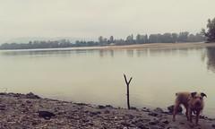 Morcsos @ Zebegny (morosus) Tags: morcsos zebegny duna sz autumn danube stick bot
