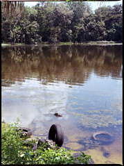 Throw a tire in the river = gilding the lily in Florida thought. (FreezerOfPhotons) Tags: mamiya645 mamiya80mmf28 unicolorc41 lomography100freshfilm lomofilm ishootfreshfilm
