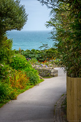 SSS_4555-Edit.jpg (S.S82) Tags: garden plant telegraphmuseum england trips cloudy flower porthcurnobeach nature coast cornwall porthcurno uk ss82 murky overcast unitedkingdom gb