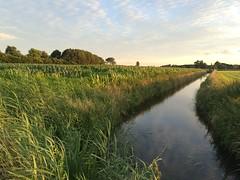 Beautiful evening (darth_sweder) Tags: sunset outdoors fiels farm sloot ditch zomer summer zonsondergang netherlands nederland gelderland holland dutch clouds cornfield mais maisveld