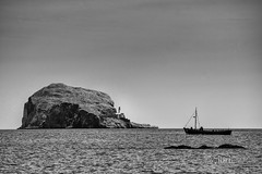 North Berwick - Bass Rock - 03.jpg (ibriphotos) Tags: blackandwhite northberwick gannet beach bass eastlothian seabird break friends polariser riverforth polarizer firthofforth daytrip weekend caravan