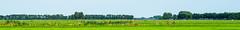 Dutch landscape (Eduard van Bergen) Tags: home stable empty farm farming apron work life living dog cat cattle vee field meadow cows animals rural molenwaard alblasserwaard liesveld achterland wetering classic area suburban silence site agrarical agrarisch nederland dutch holland netherlands niederlande frau antje cheese milk kse outdoor landscape grass plain grassland molen grazen sloot green groen verde grn riet reed treeline bomenrij horizon vista kim roodbont zwartbont lakenvelders bunker view tranquility ruhe rust tranquillitatis meadows weide fields sky
