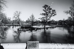 The Jubliee Bridge (taperoo2k) Tags: jubileebridge black white cherwell floods trees oxford christchurchmeadow kevintaphousephotography